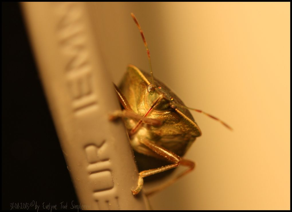 Punaise du soir... ou &quot&#x3B;Entrer dans la Lumière... comme un insecte fou..&quot&#x3B;