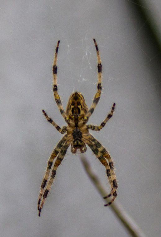 Bonne nuit les araignées !
