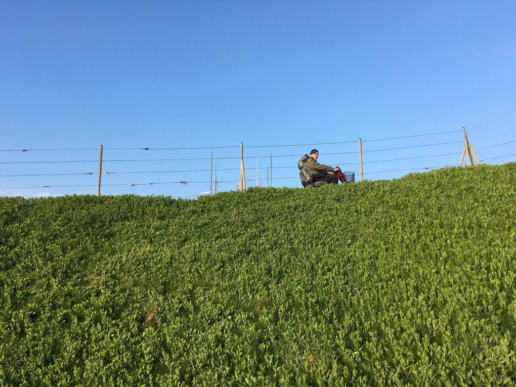 Helgoland - Impressionen