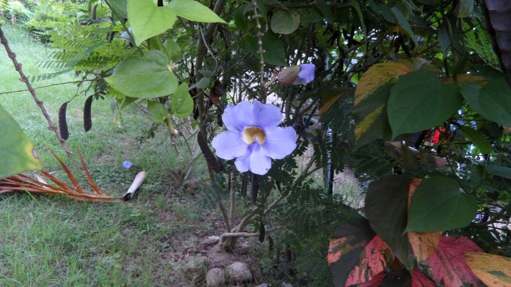 Fleurs à gogo