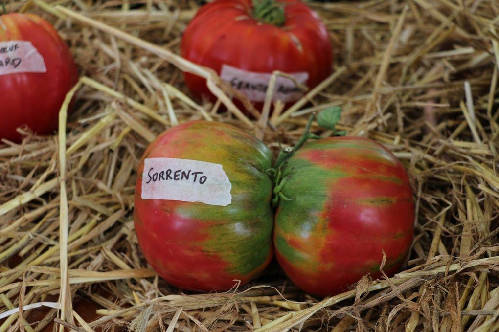 Fête de la tomate et des légumes anciens 2016 en images (1)