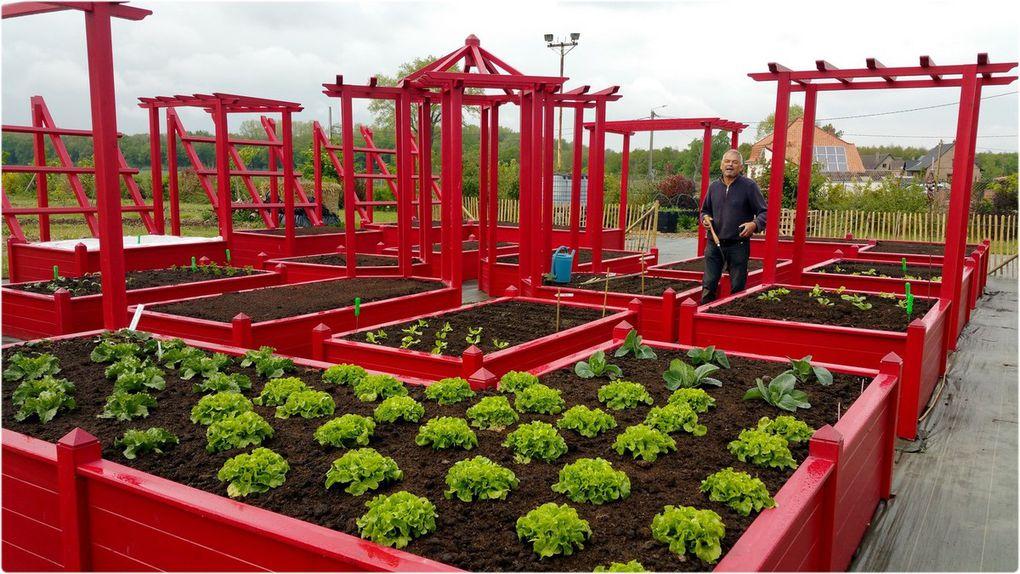 Premières plantations en avril et vues du jardin en carrés en juillet 2017