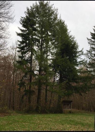 582. Jeudi 24 novembre : la forêt de Chôqueuse.