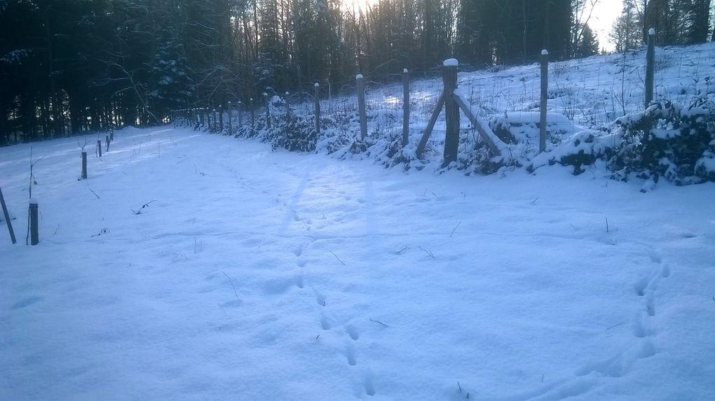 Le verger sous la neige