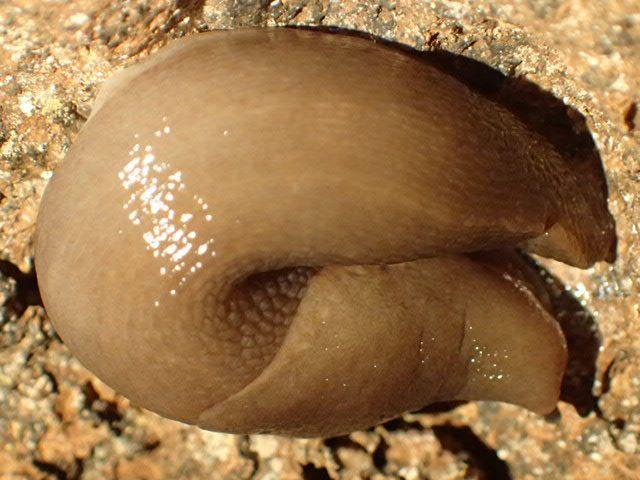 17 avril - Le ragaie de Neoules : entomologie souterraine