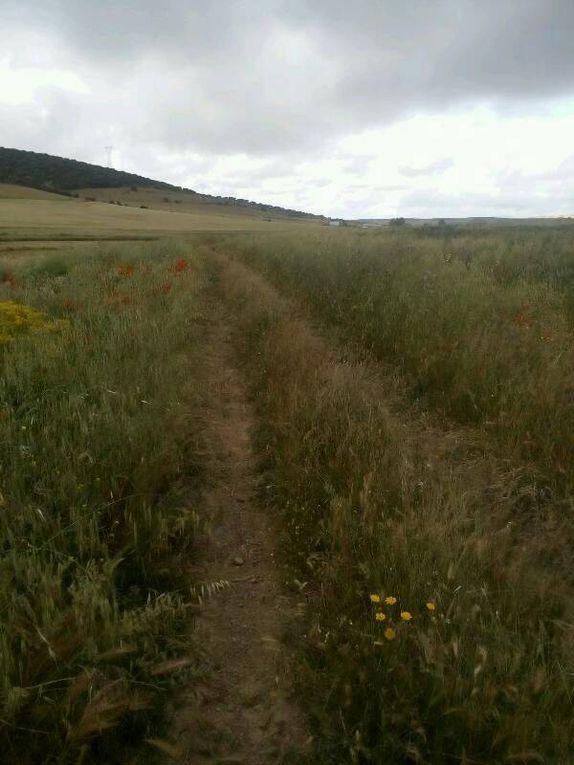 Des paysages herbeux et le vieux fou (dixit Djamel).