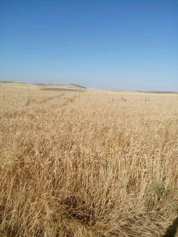 Couleur des champs et village en ruines.