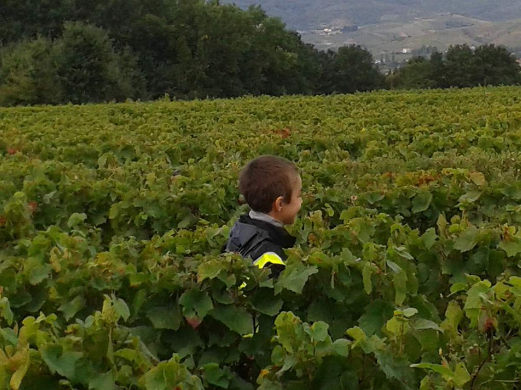 Nos vendanges : le 27 septembre 2016