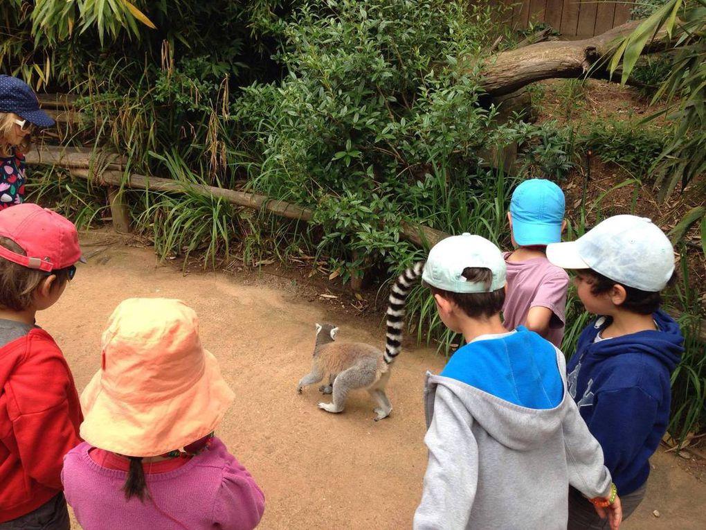 Camp safari: le grand jour de la visite du zoo