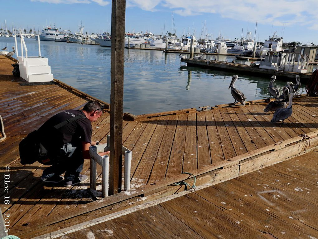 GUADALUPE : a French film-maker aboard the Nautilus Explorer