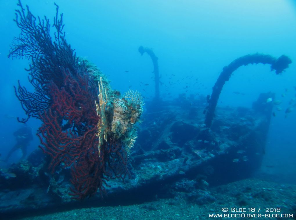 Wreck Diving : Le Liban, septembre 2016