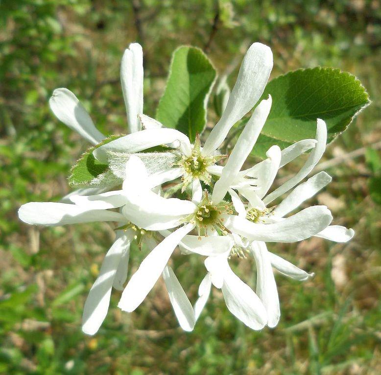 compilation fleurs de printemps