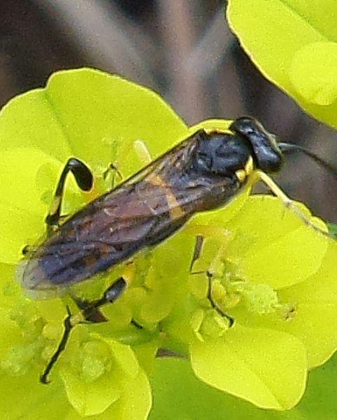 Diaporama insectes, Dijon