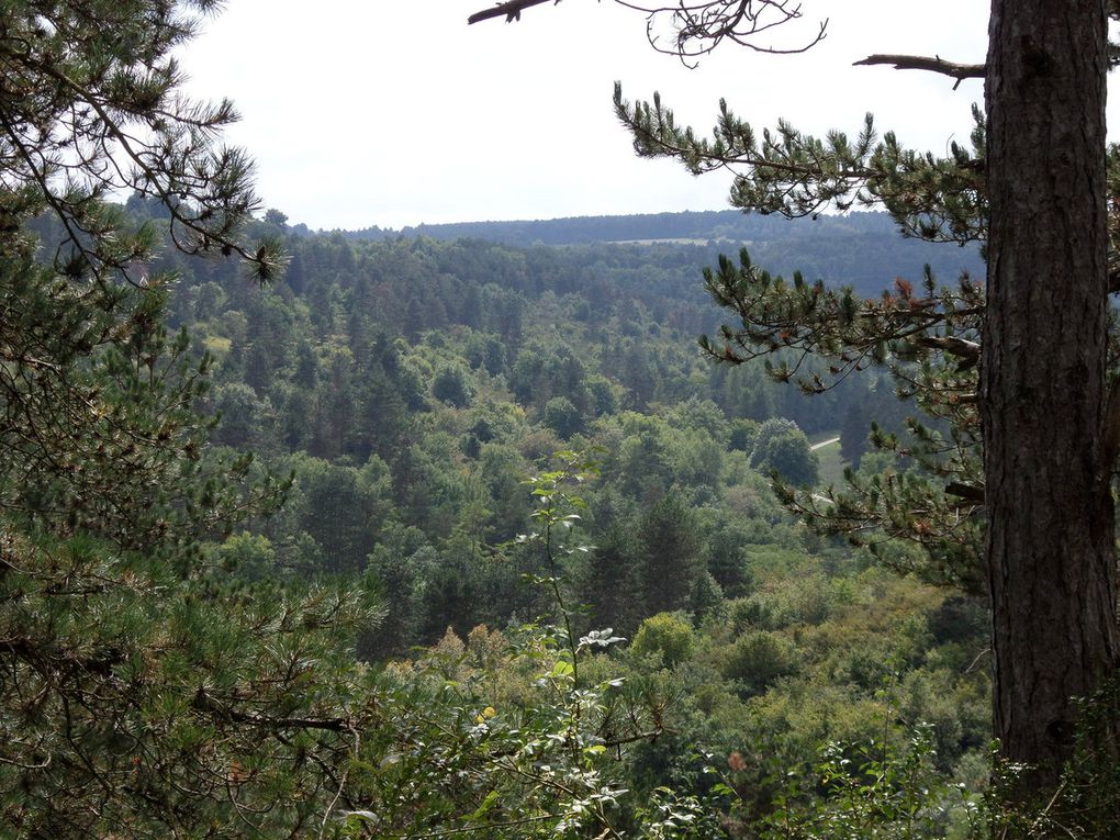 images forêt, nature dijonnaise