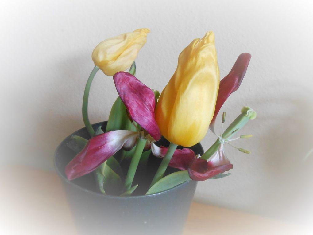 Effets autour des tulipes