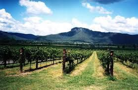 Cabernet Franc Producers Hunter Valley Australia