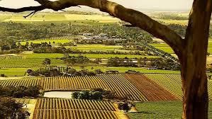 Verdelho Producers Barossa Valley Australia