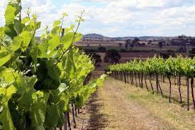 Verdelho Producers   Victoria Region Australia