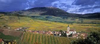 Pinot Noir d Alsace France Dept du Haut Rhin page 6