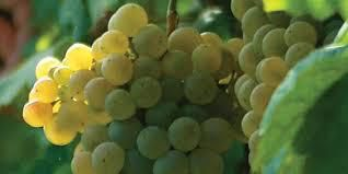 White Blend Wine Producers Barossa Valley Australia