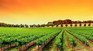 Red Blend Wines Producers Victoria Region Australia