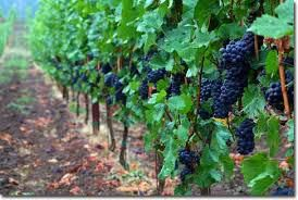Red Blend Wine Producers South Australia page 9