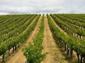 Syrah Producers Gisborne Region New Zealand