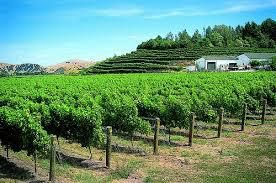Zinfandel Producers Gisborne Region New Zealand