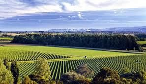 Ports Wines Producers Gisborne Region  New Zealand