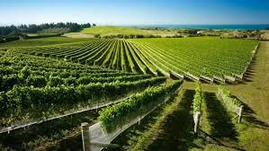 Rose Cabernet Sauvignon Producers Hawkes Bay Region New Zealand