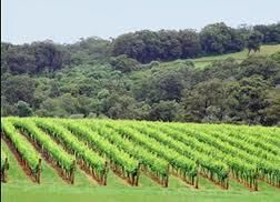 Chardonnay Producers Western Australia page 2