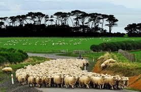 Riesling Producers Wairarapa Region New Zealand
