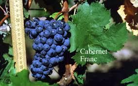 Cabernet Franc Producers Nelson Region New Zealand