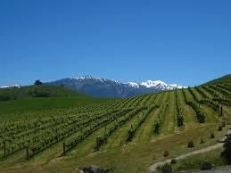 Rose Pinot Noir Producers Nelson Region  New Zealand