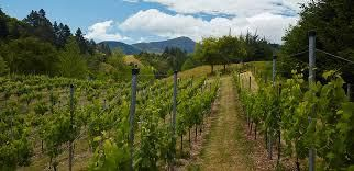 Riesling Producers Nelson Region New Zealand