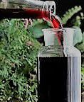 Elderberry Wine Producers Southern California