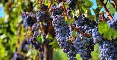Red Blend Wines Producers Southern California p2