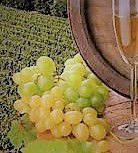 Symphony Wines Producers Southern California