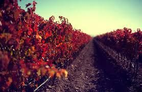 Tempranillo Producers Southern California