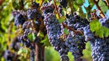 Pinot Noir Producers South Coast California