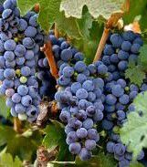 Primitivo Producers South Coast California