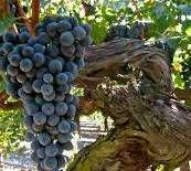 Cabernet Sauvignon Producers Central Coast California