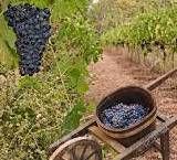 Tuscan Producers Central Coast California