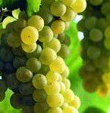 Chardonnay Producers North Coast California