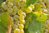 Chardonnay Producers North Coast California