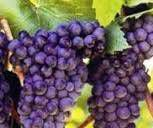 Red Blend Wines Producers San Francisco Bay California