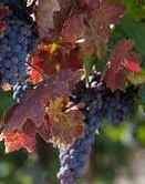 Rose Zinfandel Producers Central Valley California
