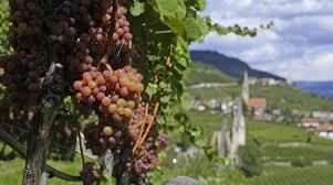 Gewurztraminer Producers Alsace Region France p14