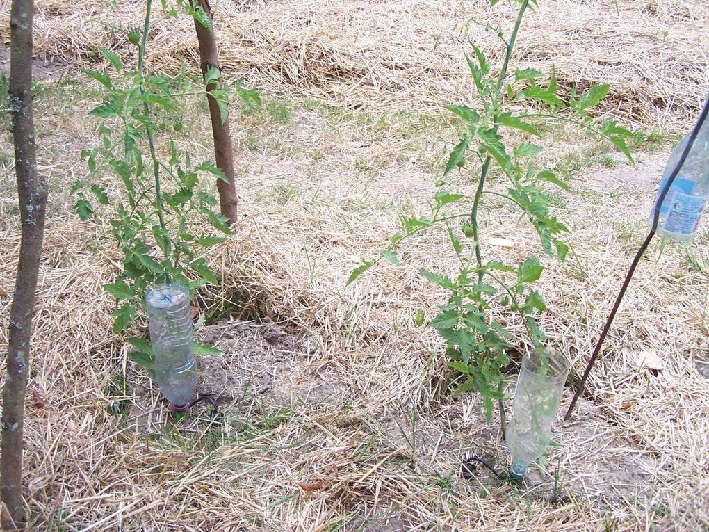 Les premiers aménagements du jardin