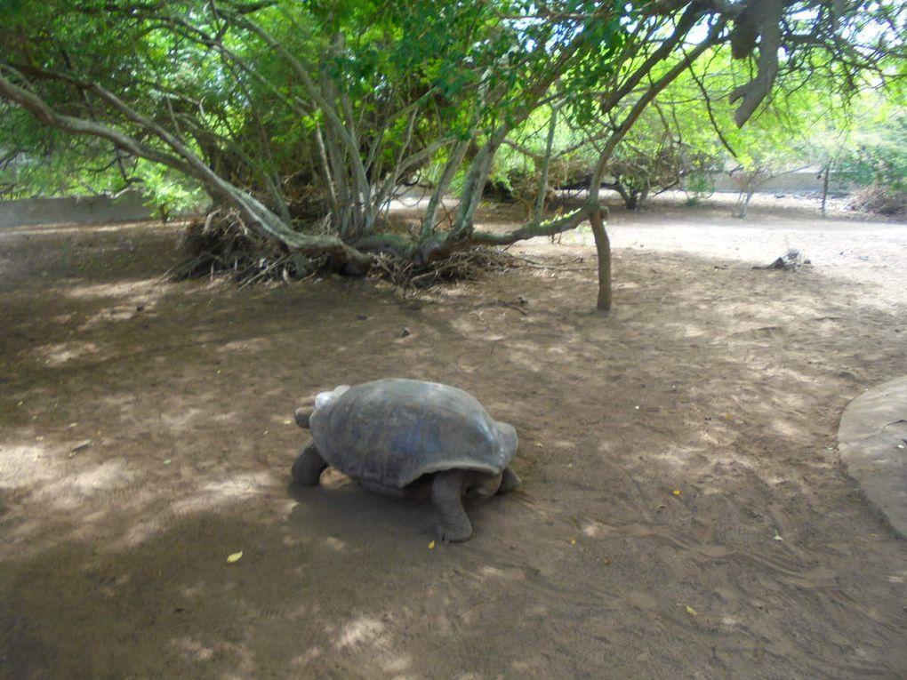 Archipel des Galápagos - un rêve éveillé